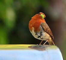 Hello Mr Robin by Deborah Durrant