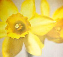 Daffodils by SJAPhoto