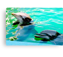 Dolphins at the aquarium Canvas Print