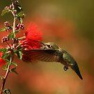 Humming Bird. by mikepemberton