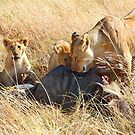Lioness  & her Cubs at a Wildebeest Kill, Maasai Mara, Kenya by Carole-Anne