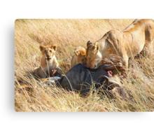 Lioness  & her Cubs at a Wildebeest Kill, Maasai Mara, Kenya Canvas Print