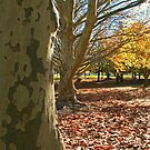 Autumn view by CaDra