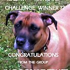 Banner for Dog-group by Heidi Mooney-Hill