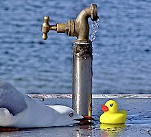 """""""Hello,who are you?""""says Mr Seagull. by waxyfrog"""