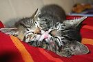 Kittens Sleeping Cuties by Jo Nijenhuis