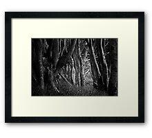 Forest Highlight - Isle of Mull Framed Print