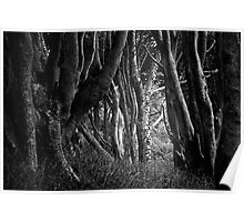 Forest Highlight - Isle of Mull Poster