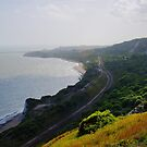 Folkestone Warren Towards Folkestone by Dave Godden