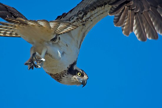 Close Encounter of the Avian Kind  by Daniel  Parent