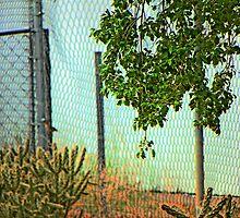 Across the Street by Lenore Senior