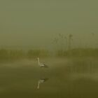stork on foggy lake by Mustafa UZEL