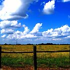 Colorful Texas by DionNelson