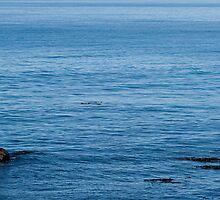 Ocean Drift by Belinda Osgood