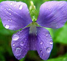 Miniature Flower Butterfly by bharrisphoto