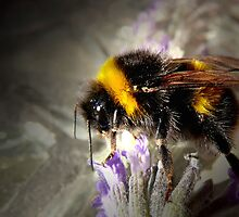 Just Bumble by Josie Jackson