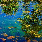 Leaves on the Water by Laurast