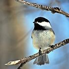 Chickadee by Laurast