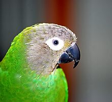 Henri the Green Parrot by Laurast