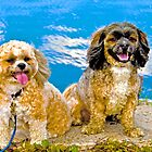 Two Shitz-Tzu Near Water by Laurast