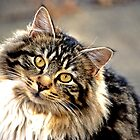 Tabby Cat by Laurast