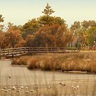 Canning River #3, Shelley, Western Australia by Elaine Teague