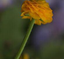 A Little Bit of Beauty by Renee Blake