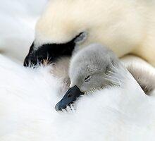 Sweet Dreams by Jacky Parker