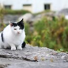Cat in Kilronan by Jeff Stanford