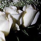 White Roses On Black Background by Laurast