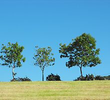 Trees on the skyline at Cultra, County Down by aldfreckian