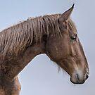 Horse Portrait by Henri Ton