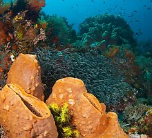 The sponge gardens of Bangka (Lembeh Indonesia) by Stephen Colquitt