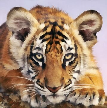 Tiger Cub by Walter Colvin