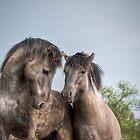 Konik Horses by Henri Ton