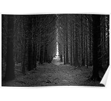 Langamull Forest 01 - Sitka Spruce Avenue Poster