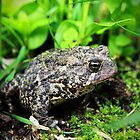 Toad by Becky Trudell