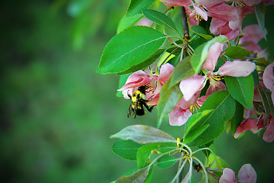 Bumble Bee by Becky Trudell