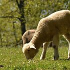 Grazing Lamb by Sheryl Langston