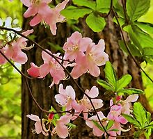 Wild Azalea by Barbara  Brown