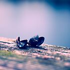 Clam shells by fcphoto