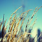 Peaceful Spring wind by fcphoto