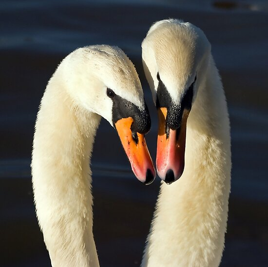 Love is.... by Steve  Liptrot