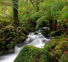 Rainforest Paradise- Yarra Ranges VIC by Cameron B