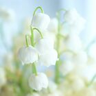 Tiny,white and fragrant by aMOONy
