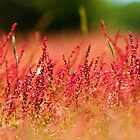 Red Heather  by Melanie Simmonds