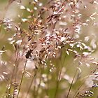 Insects Amongst the Grasses by Melanie Simmonds