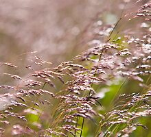 Shining Grasslands - Puttenham Common by Melanie Simmonds