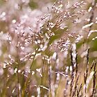 The Warmth of the Grasslands by Melanie Simmonds
