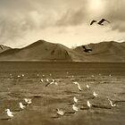 Raven and Gulls by Corri Gryting Gutzman